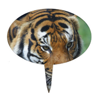 Hi-Res Malay Tiger Close-up Cake Toppers