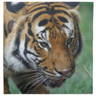 Hi-Res Malay Tiger Close-up Napkin