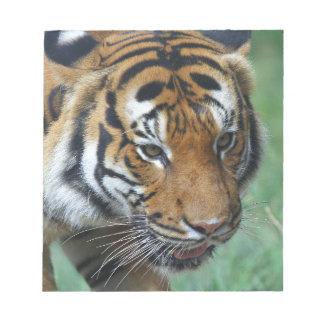 Hi-Res Malay Tiger Close-up Notepad