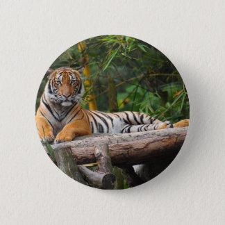 Hi-Res Malay Tiger Lounging on Log 6 Cm Round Badge