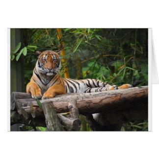 Hi-Res Malay Tiger Lounging on Log Card