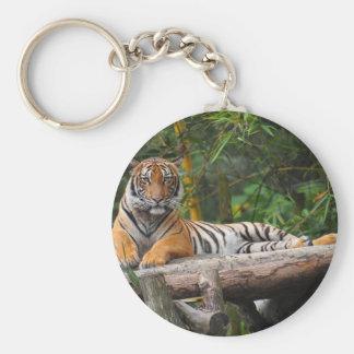 Hi-Res Malay Tiger Lounging on Log Key Ring