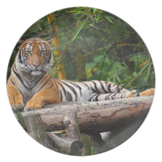 Hi-Res Malay Tiger Lounging on Log Plate