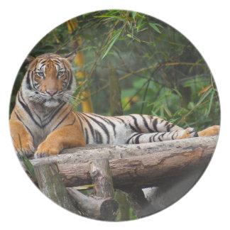 Hi-Res Malay Tiger Lounging on Log Plate