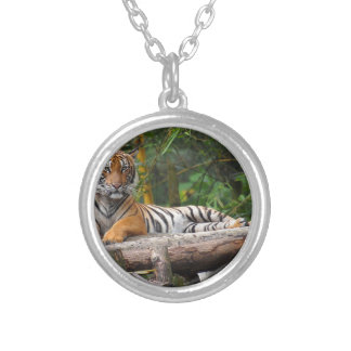 Hi-Res Malay Tiger Lounging on Log Silver Plated Necklace