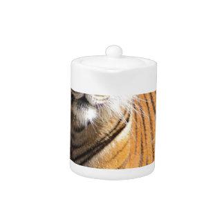 Hi-Res Malayan Tiger