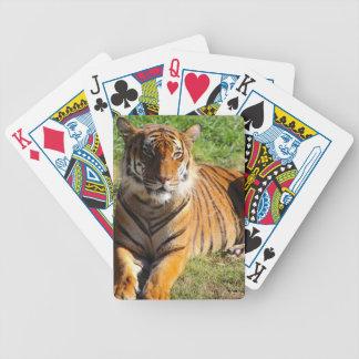 Hi-Res Malayan Tiger Bicycle Playing Cards