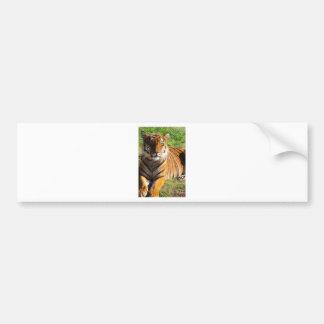 Hi-Res Malayan Tiger Bumper Sticker