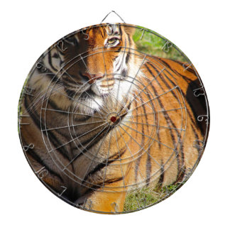 Hi-Res Malayan Tiger Dartboard