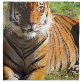 Hi-Res Malayan Tiger Napkin