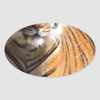 Hi-Res Malayan Tiger Oval Sticker