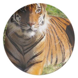 Hi-Res Malayan Tiger Plate