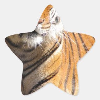 Hi-Res Malayan Tiger Star Sticker