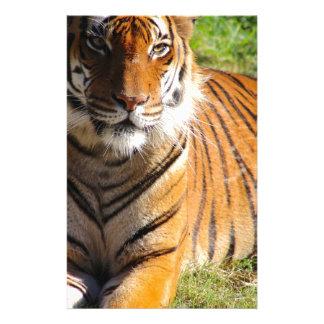 Hi-Res Malayan Tiger Stationery