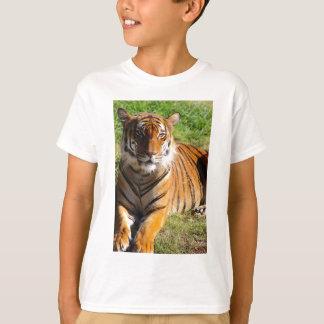 Hi-Res Malayan Tiger T-Shirt