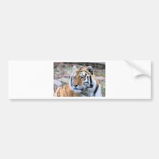 Hi-Res Stoic Royal Bengal Tiger Bumper Sticker