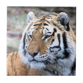 Hi-Res Stoic Royal Bengal Tiger Ceramic Tile