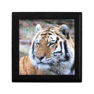 Hi-Res Stoic Royal Bengal Tiger Gift Box