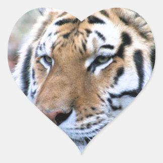 Hi-Res Stoic Royal Bengal Tiger Heart Sticker