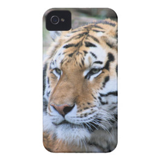 Hi-Res Stoic Royal Bengal Tiger iPhone 4 Case-Mate Case