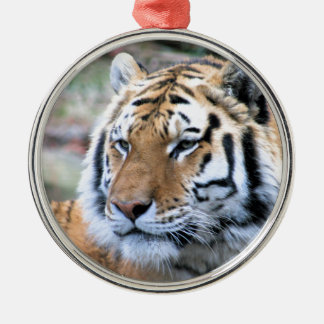 Hi-Res Stoic Royal Bengal Tiger Metal Ornament