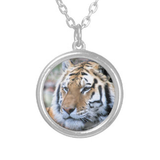 Hi-Res Stoic Royal Bengal Tiger Silver Plated Necklace