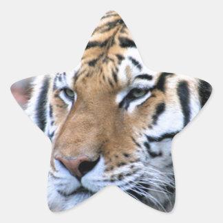 Hi-Res Stoic Royal Bengal Tiger Star Sticker