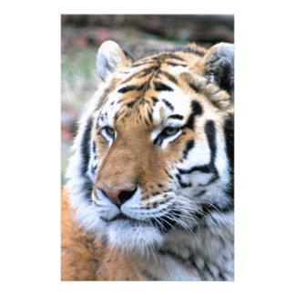 Hi-Res Stoic Royal Bengal Tiger Stationery