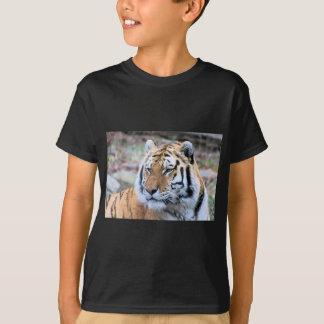 Hi-Res Stoic Royal Bengal Tiger T-Shirt