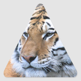 Hi-Res Stoic Royal Bengal Tiger Triangle Sticker