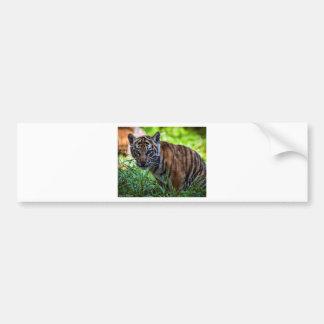 Hi-Res Sumatran Tiger Cub Bumper Sticker