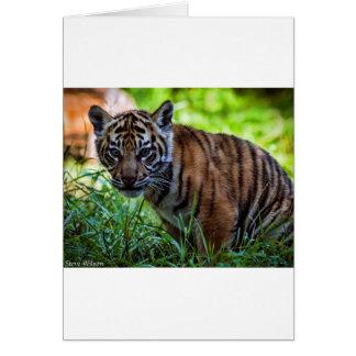 Hi-Res Sumatran Tiger Cub Card