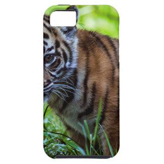 Hi-Res Sumatran Tiger Cub Case For The iPhone 5