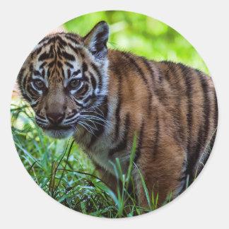 Hi-Res Sumatran Tiger Cub Classic Round Sticker