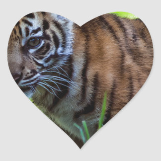 Hi-Res Sumatran Tiger Cub Heart Sticker
