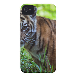 Hi-Res Sumatran Tiger Cub iPhone 4 Cases