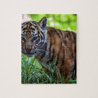 Hi-Res Sumatran Tiger Cub Jigsaw Puzzle