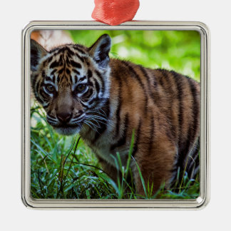 Hi-Res Sumatran Tiger Cub Metal Ornament