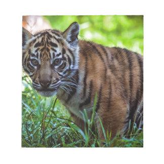 Hi-Res Sumatran Tiger Cub Notepad
