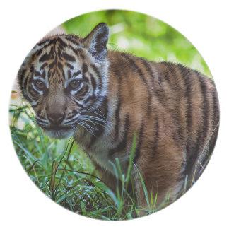 Hi-Res Sumatran Tiger Cub Plate