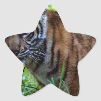Hi-Res Sumatran Tiger Cub Star Sticker