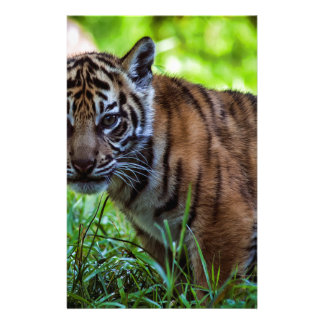 Hi-Res Sumatran Tiger Cub Stationery