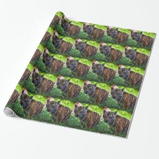 Hi-Res Sumatran Tiger Cub Wrapping Paper