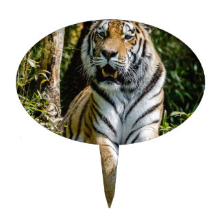 Hi-Res Tiger in Muenster Cake Toppers