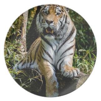 Hi-Res Tiger in Muenster Plate