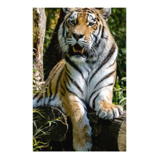 Hi-Res Tiger in Muenster Stationery