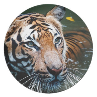 Hi-Res Tiger in Water Dinner Plate