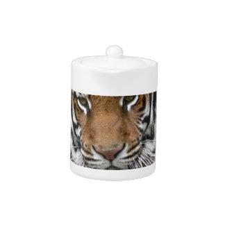 Hi-Res Tigres in Contemplation