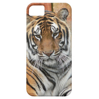 Hi-Res Tigres in Contemplation Barely There iPhone 5 Case