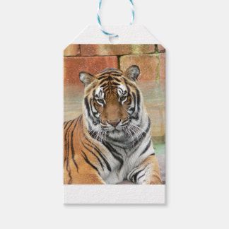 Hi-Res Tigres in Contemplation Gift Tags